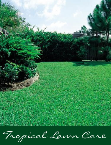 Tampa, FL - Lawns - Tropical Lawn Care